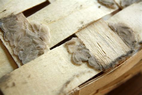 How To Stop Pantry Moths by Overcoming A Pantry Moth Plague No Ordinary Homestead