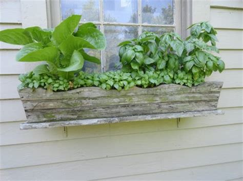 window box garden vegetables vegetables garden in window boxes www coolgarden me