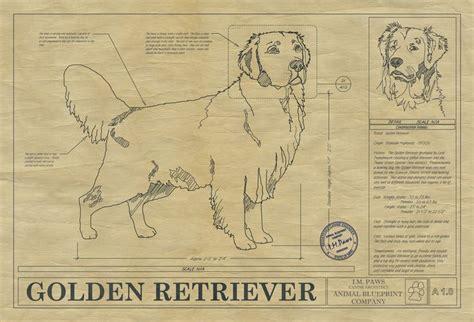 golden retriever blueprint 17 best images about golden retrievers on costumes volunteers and