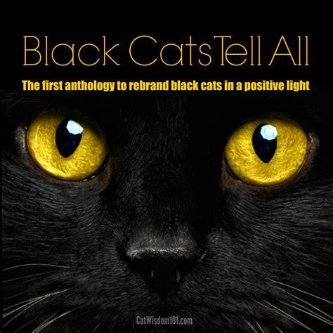 Black Cat kickstarter caign black cats tell all with cats