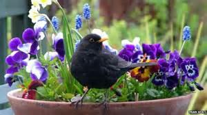 bbc nature gardening to attract wildlife