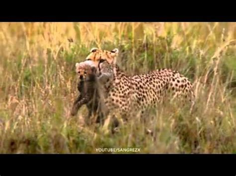 imagenes de animales con movimiento animales en movimiento islam bolivia youtube