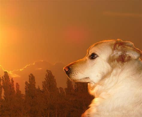 sundowners in dogs sundown by jacky bunny on deviantart