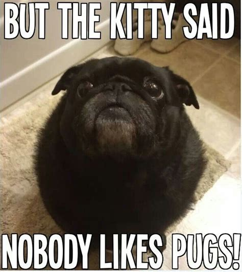 help my pug stinks but the said nobody likes pugs pug the o jays