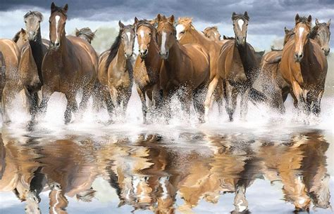 equestrian wallpaper for walls wild horse wallpapers group 74