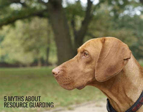 puppy resource guarding 5 myths about resource guarding in dogs puppy leaks