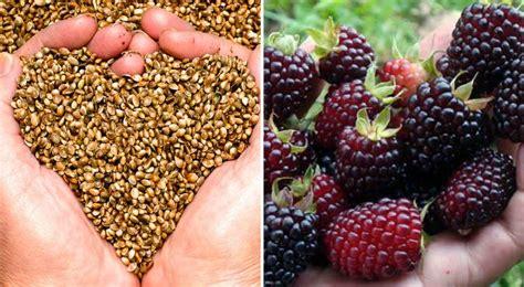 alimentos laxantes rapidos los mejores laxantes naturales r 225 pidos y efectivos