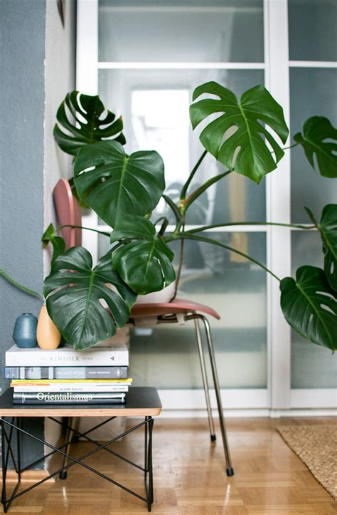 plants to have in bedroom natural look for the bedroom 183 happy interior blog