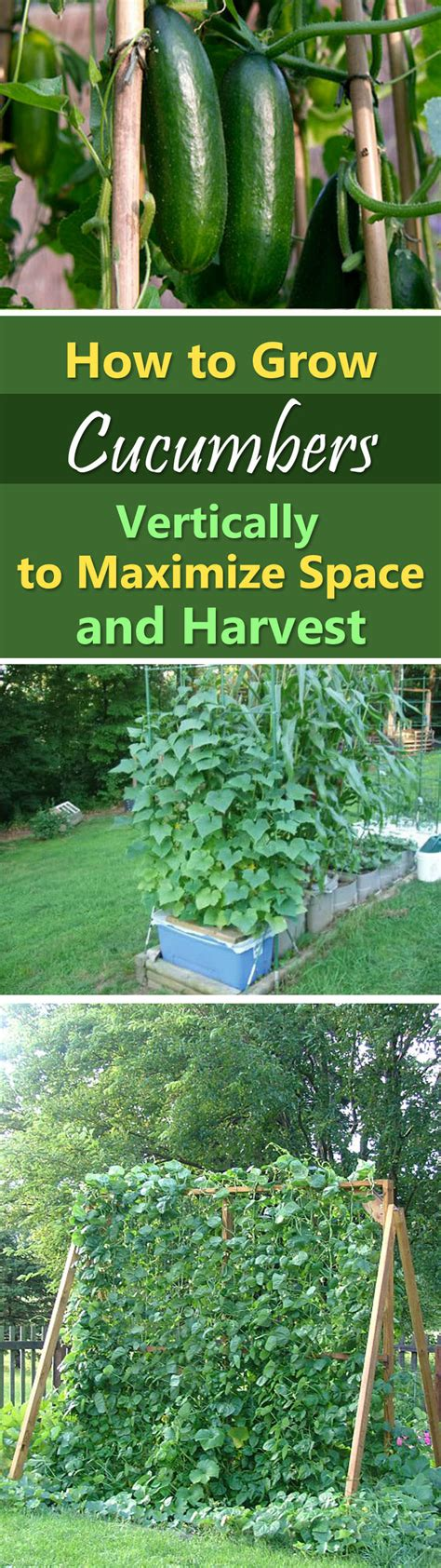 how to grow vegetables in a small garden growing cucumbers vertically how to grow cucumbers in
