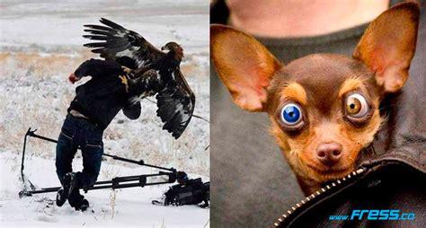 imagenes comicas de animales fotos chistosas de animales holidays oo