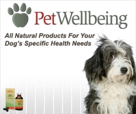 dog diabetes treatment natural general information about dog diabetes