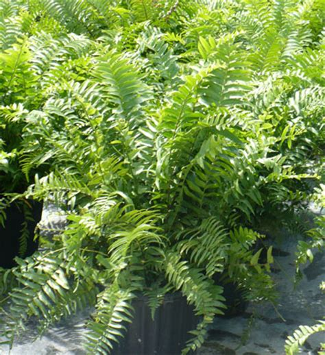 Boston Plant Nursery by Image Gallery Foliage