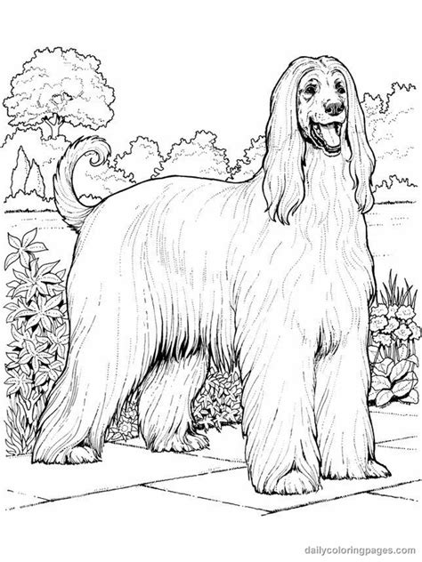 coloring pages hound dog pin afghan hound full issue on pinterest