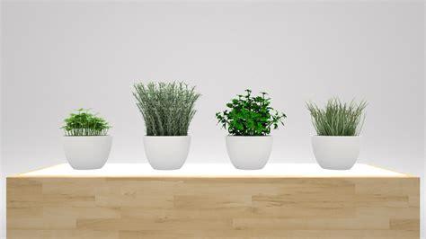plants in kitchen kitchen plants 3d by nobrandstudio 3docean
