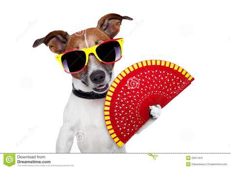 dog house in spanish spanish dog stock image image 25611641