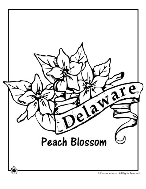 coloring pages of state flowers delaware state flower coloring page woo jr kids activities