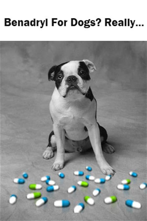 is benadryl safe for dogs benadryl for dogs knowing when benadryl for dogs is the right choice
