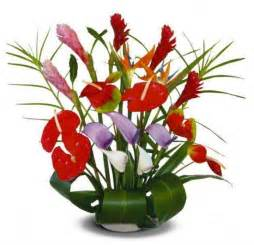 flowers and plants flowers for flower lovers flowers plants