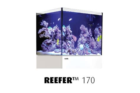 Aquarium Sweepstakes - rss red sea reefer 170 sweepstakes winners marine aquariums south africa