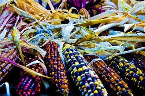 colors of corn the colors of corn photograph by larry goss