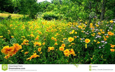 imagenes flores salvajes flores salvajes imagen de archivo imagen de flores prado