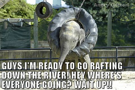 floating boat meme 30 most funny elephant meme pictures and photos