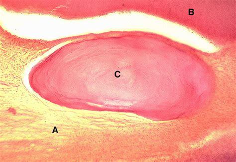enlarged image untitled document www uky edu