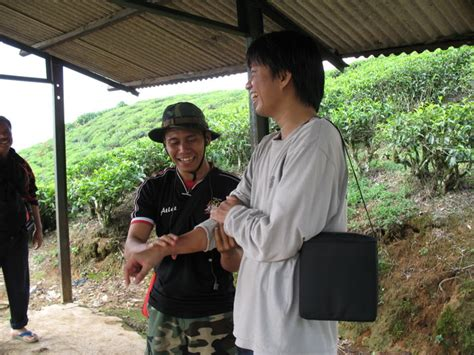 taman nasional gunung halimun salak perkebunan teh