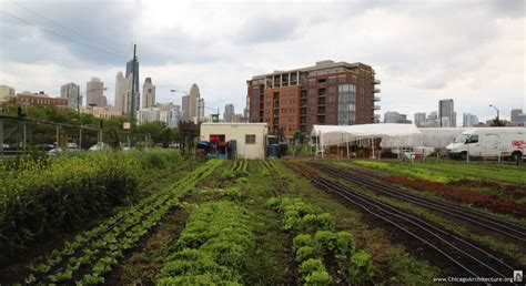 and city city farm will sprout again chicago architecture