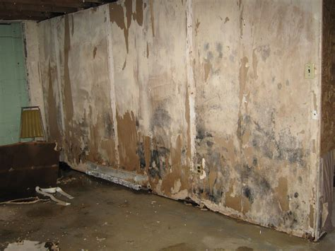 basement mold what happens to homes in philadelphia when the water isn t dried properly