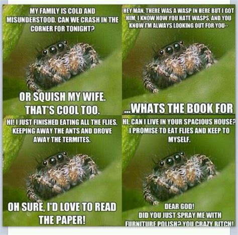 Friendly Spider Meme Picture Webfail - 22 best spider humor images on pinterest ha ha funny