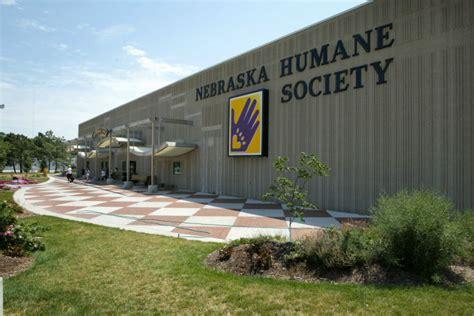 nebraska humane society dogs nebraska humane society puts dogs cats on sale news omaha
