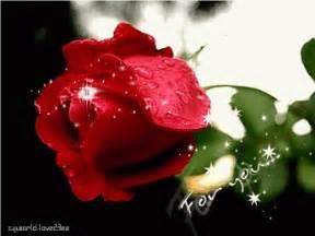 imagenes de rosas rojas en movimiento imagen rom 225 ntica de rosas rojas de amor con movimiento y