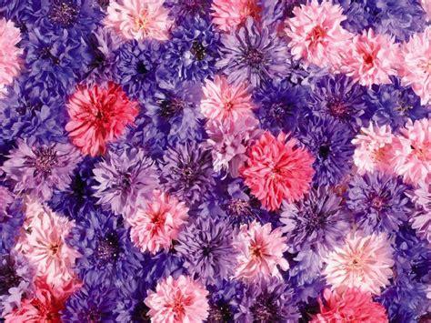 any design of flowers download bilder f 252 r das handy pflanzen blumen