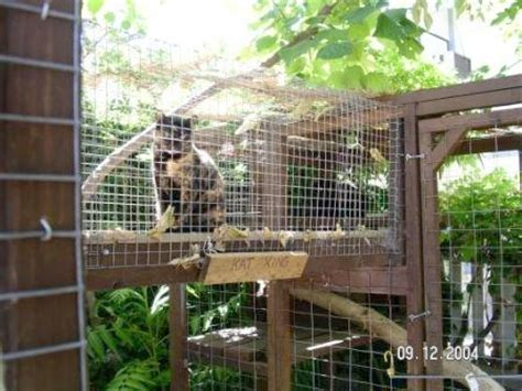 cat patio enclosures for cats community concern for cats