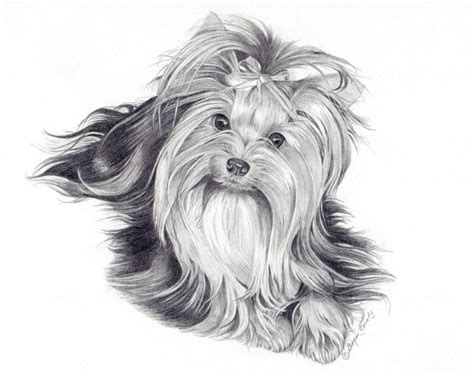coloring page yorkie poo pin yorkie coloring pages dogs ajilbabcom portal on pinterest