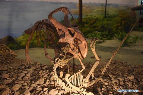 wange 26111 dinosaur park dinosaur national geology park in ne china 1 11