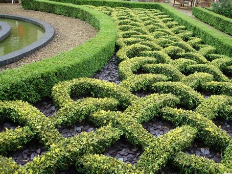 hedging ideas for gardens 25 best ideas about garden hedges on hedges hedges landscaping and hedge fence ideas