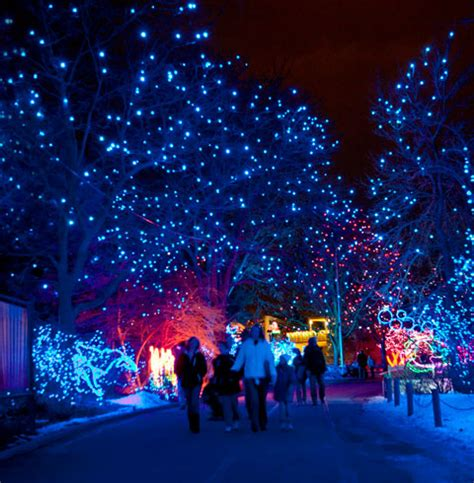 Holiday Events In Denver Denver Com Zoo Lights Pictures