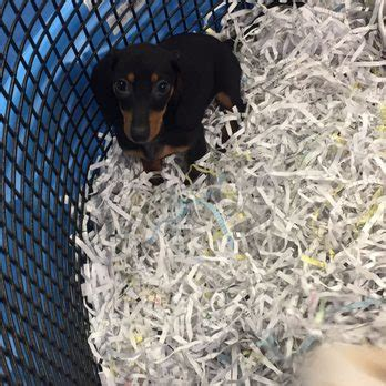 puppies galore and more puppies galore more 16 photos 15 reviews pet shops 8102 blanding blvd