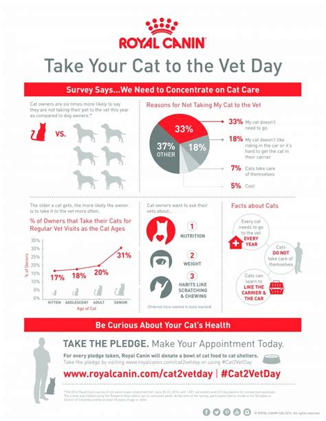 today is national take your cat to the vet day