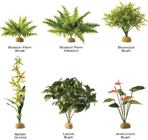 a plant in the tropical rainforest pictures plants found tropical rainforest just for