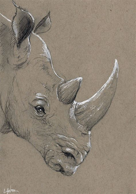 sketchbook grey paper rhino sketch by jlawe on deviantart
