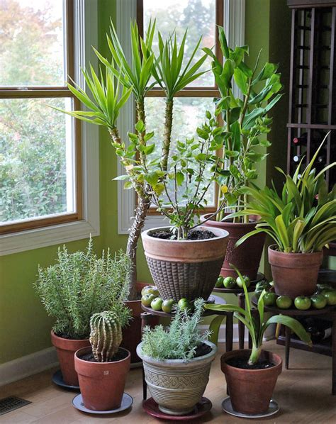 Houseplants by Houseplants 171 Extension Master Gardener