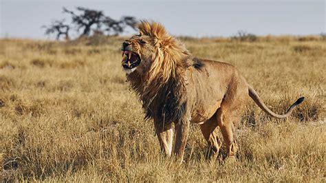 imagenes de la vida salvaje grandes documentales iconos de la vida salvaje los