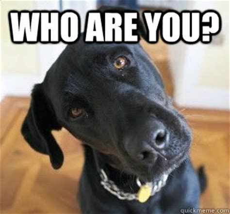 Confused Dog Meme - who are you confused dog quickmeme
