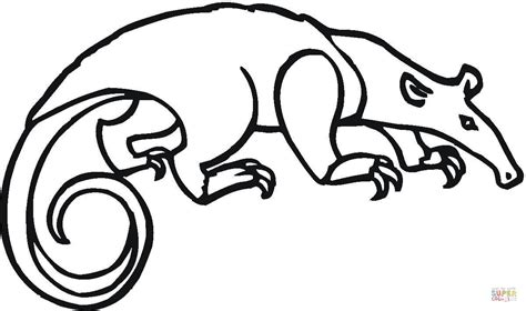 Anteater Printable Coloring Pages Anteater Coloring Page