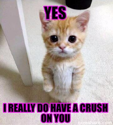 I Have A Crush On You Meme - meme creator yes i really do have a crush on you meme