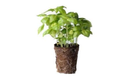 vasi biodegradabili vasi biodegradabili