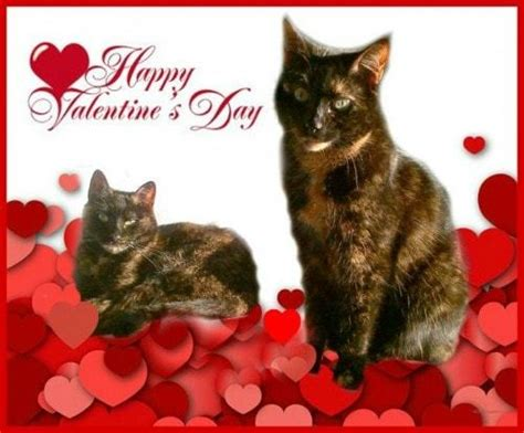happy valentines day cat happy s day 2017 the conscious cat